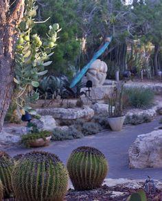 in Holon cactus park Cactus Park, Israel, Plants, Plant, Planets