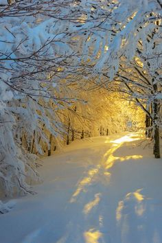 Snow Sunrise | yellow sunlight in winter trees | @Valerie Avlo Uhlir landscape favorite | nature |