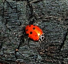 Ladybug Loveliness And Cuteness - News - Bubblews