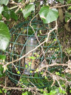 Hanging basket used to protect feeder from big birds.