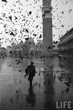 yama-bato:    Venice, Italy  Pigeons flocking above pedestrians crossing Piazza San Marco on a rainy Venice day.  Location:Venice, ItalyDate taken:December 1952Photographer:Dmitri Kessel