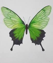 dibujos de mariposas con lapices de colores - Buscar con Google