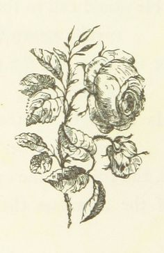 Image taken from page 22 of 'Flowers, Earth's silent voices. Sketched and painted by S. G. [and accompanied with select verses]' | by The British Library