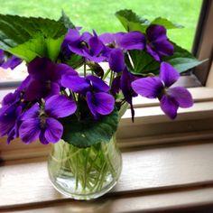 Spring violets on my windowsill ~ photo by Dara Inman.2014