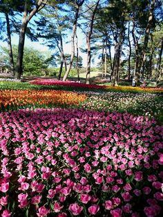 Hitachi Seaside Park - Hitachinaka - Reviews of Hitachi Seaside Park - TripAdvisor