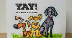 #SSSFAVE SSS Big Birthday Wishes.   SA Crazy Dogs