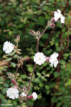 Healing Herbs, Flowers, Plants, Gardening, Wallpaper, Hobbies, Lawn And Garden, Wallpapers, Plant
