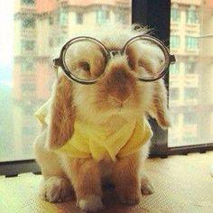 Harry Potter Bunny!!