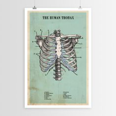 Whether you're a medical student or a student of amazing vintage-style art, The Human Thorax art poster will bring knowledge and beauty to your walls. Our line of curated art posters are printed on fi Brain Poster, Creepy History, Vinyl Record Collection, Anatomy Art, Brain Anatomy, Outdoor Throw Pillows, Art Sketchbook, Dot And Bo, New Art