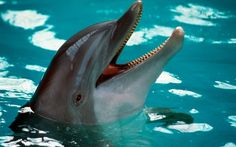 """Ukraine has asked Russia to return its """"spy dolphins"""" – which found themselves under Russian rule when Crimea was annexed"""