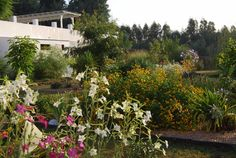 The Beautiful Gardens to explore in Portugal on the Keri Lincoln Primal Yoga Retreat