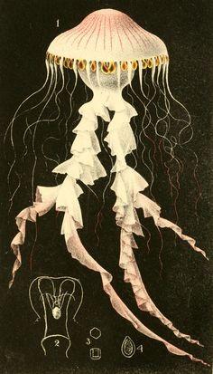 Philip Henry Gosse - A naturalist's rambles on the Devonshire coast - 1853