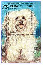 """Cuban CH """"Puppy"""" on a stamp"""
