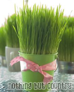 """Been feeding this stuff to my chicken the last 5 months. Just occurred to me today that I might like it too. Found this fun site on """"How to grow your own Wheat Grass""""! Custom Woodworking, Woodworking Projects Plans, Growing Wheat Grass, Grow Your Own, Garden Landscaping, Natural Health, Spring, Easter Eggs, 5 Months"""