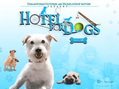 32 Best Hotel For Dogs