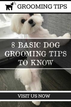 The Top 3 Dog Grooming Tips *** Click image for more details. Dog Grooming Styles, Dog Grooming Shop, Dog Grooming Salons, Puppy Care, Pet Care, Dog Shampoo, Dog Teeth, New Puppy, Dog Gifts