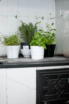 herbs double as kitchen decor & are