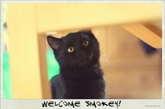 Welcome Smokey! Cats, Animals, Gatos, Animales, Animaux, Kitty, Cat, Cats And Kittens, Animal