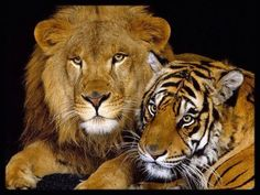 Tiger,Puma & Co