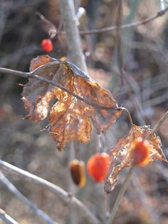 autumn, fall, herbst Autumn Fall, Meat, Fruit, Pictures
