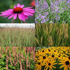 De mooiste borderplanten en -combinaties | MijnTuin.org Echinacea Purpurea Magnus, Garden Plants, Planting Flowers, Image, Star, Gardens, Lawn And Garden, All Star, Red Sky At Morning
