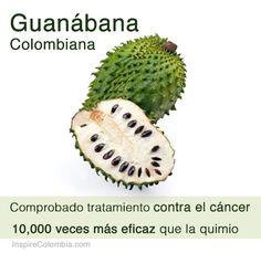 Guanábana, el milagro medicinal de la naturaleza #SomosTurismo #Colombia