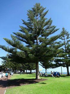 Busselton, WA Western Australia, Westerns, Places To Go, Sidewalk, Plants, Travel, Beautiful, Viajes, Traveling