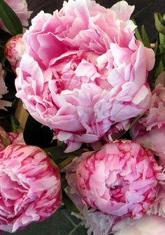 Peonies ~ from French farmers markets. Photo by Jane LaFazio. I think I'd like to plant some peonies. They are so pretty and full. Fresh Flowers, Pink Flowers, Beautiful Flowers, Exotic Flowers, Yellow Roses, Pink Roses, Peony Colors, Sugar Flowers, Tropical Flowers
