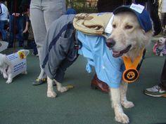 Mailman Dog Costume #Pet Costumes #Dog #Halloween #Costumes #Pets