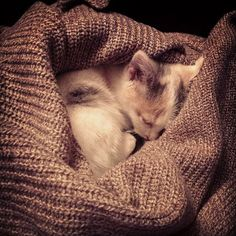 Good night Lyly