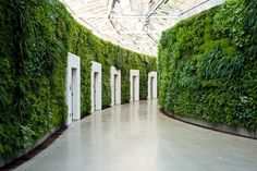 indoor living walls
