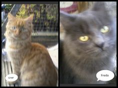 Brother and sister www.wearvalley.cats.org.uk 0845 313 4749 #adoptacat #catsprotection #darlington