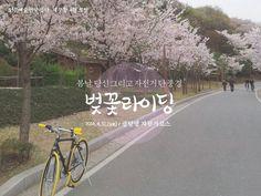 [체부동184] 2014년 4월, 벚꽃라이딩
