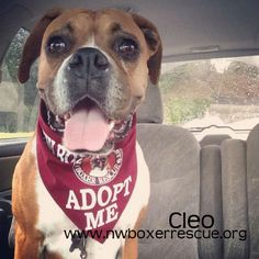 Cleo has been adopted!! Congrats Cleo!