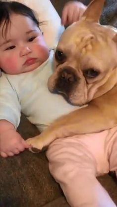 Super Cute Puppies, Cute Baby Dogs, Funny Dog Memes, Cute Funny Babies, Cute Wild Animals, Cute Funny Animals, Animals Beautiful, Cute Baby Videos, French Bulldog Puppies