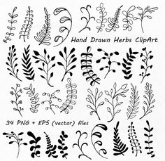 Flower Doodles Discover Hand Drawn Herbs Clipart Leaves clip art Herbs Silhouette PNG EPS AI Vector Laurel Clipart Personal and Commercial Use Doodles Zentangles, Zentangle Patterns, Embroidery Patterns, Flower Embroidery, Grass Silhouette, Silhouette Png, Doodle Drawings, Doodle Art, Doodle Images