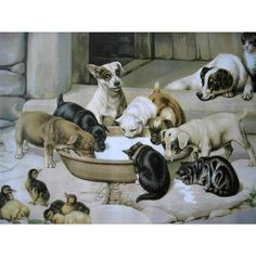 c1902 Five O'Clock Tea Print Dog Cat chicken Duck W H Trood Chromolithograph Farmyard Animal SCARCE Half Yard Long Woolson Spice Bright Paintings, Dog Paintings, Parsons Terrier, Cat Clock, Art Prints For Sale, Dee Dee, China Painting, Farm Yard, Antique Art