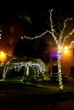Lion in Winter Ball- Firelight Trees