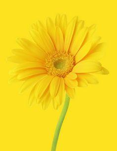 ....mellow yellow
