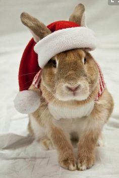 Santa bunny bunnies christmas bunny, christmas animals и rab Hamsters, Christmas Bunny, Christmas Animals, Merry Christmas, Celebrating Christmas, Christmas Mood, Rabbit Pictures, Cute Pictures, Baby Animals