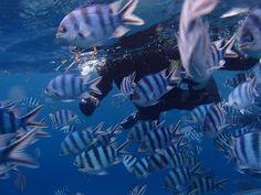 今天的沖繩^^這是去藍洞! - http://www.natural-blue.net/blog-tw/info_31491.html