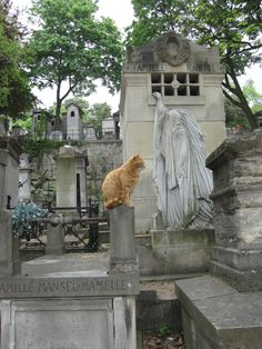 Katze Friedhof Pere Lachaise,  Cat, Cemetery, Paris, Cimetiere,