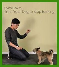 Dog Obedience Classes for Your Pets   Dog Training -- You can get more details by clicking on the image. #rescue #puppytrainingdiy #dogobediencetraining