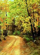 Nature Landscape Lighting by Edna Wallen