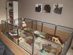 Diy Bunny Cage, Bunny Cages, Rabbit Cages, House Rabbit, Bunny Rabbits, Rabbit Playpen, Pet Rabbit, Rabbit Enclosure, Reptile Enclosure