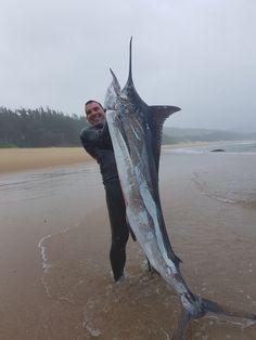 SA spearfishing record blue marlin 41.6kg