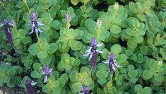 Herb Garden, Gardening Tips, Herbs, Plants, Diet, Herbs Garden, Herb, Plant, Planets
