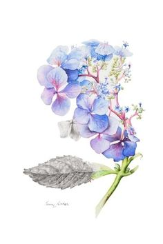 38 New Ideas for tattoo shoulder hydrangea Watercolor Pictures, Watercolor Flowers, Watercolor Paintings, Tattoo Watercolor, Flower Paintings, Oil Paintings, Watercolors, Cover Tattoo, Arm Tattoo