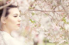 cherry blossom photoshoot - Google Search