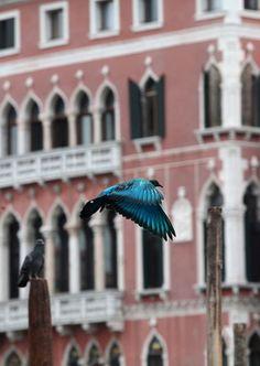 Pigeon Safari